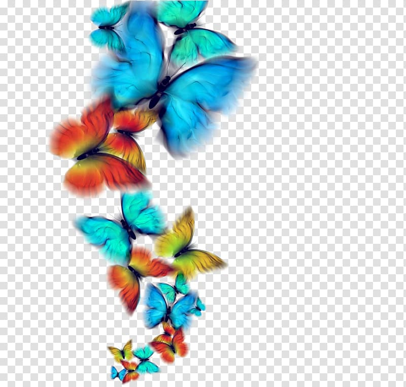 Blue, red, and yellow butterflies illustration, Butterfly.