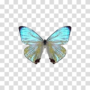 Teal and yellow butterfly transparent background PNG clipart.