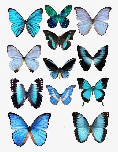 Color Butterfly Specimen in 2019.