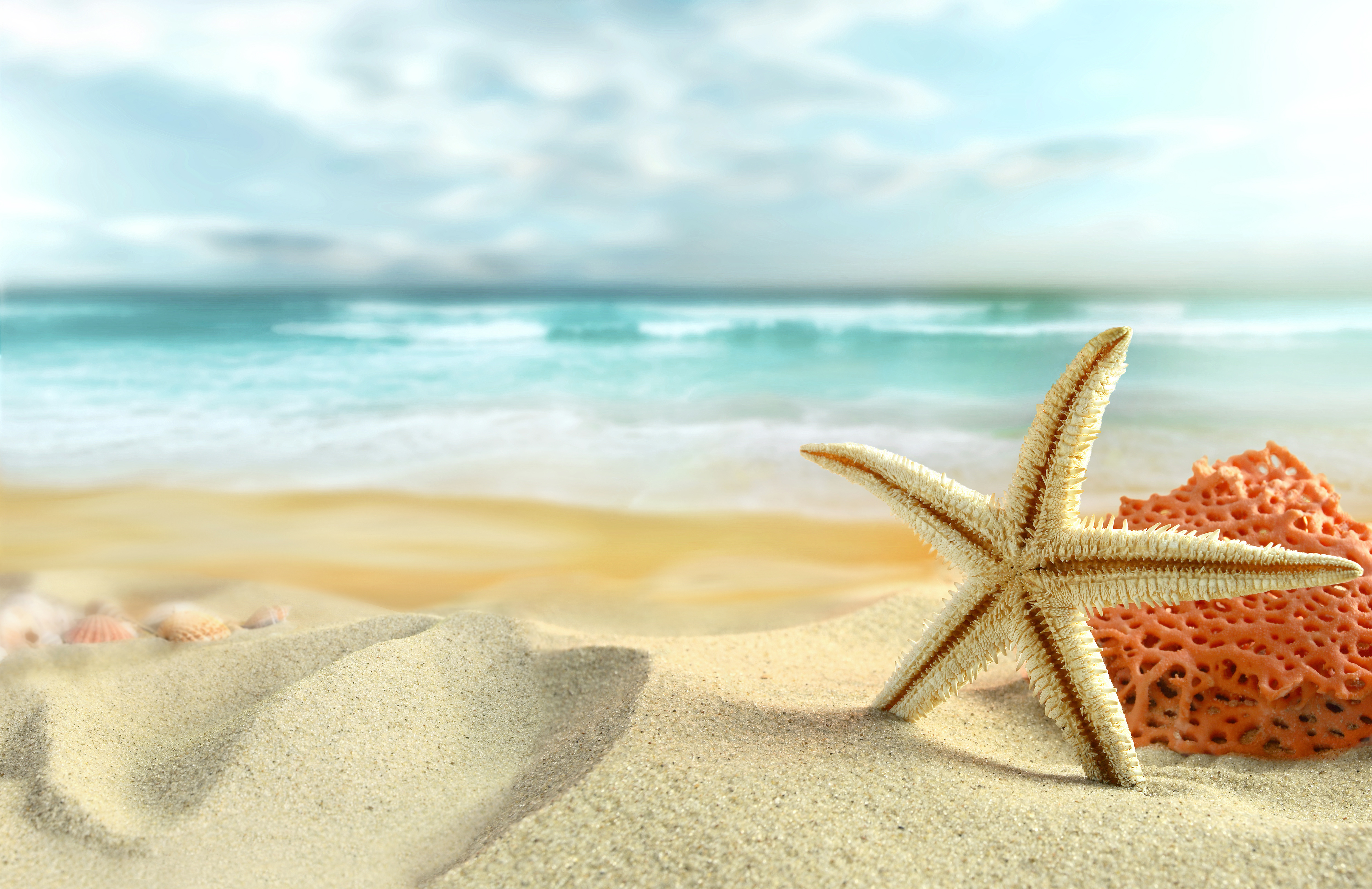 Sea Sand and Shells Background.