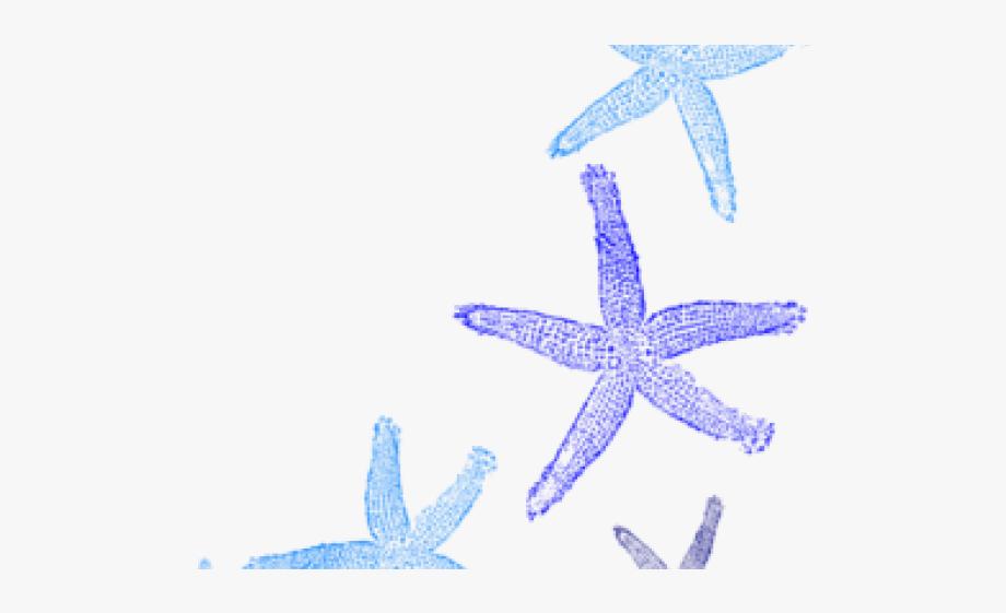 Starfish Clipart Summer.