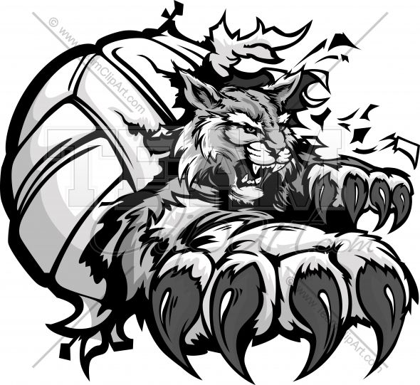 Wildcat Volleyball Cartoon Mascot with Claws tearing out of a.