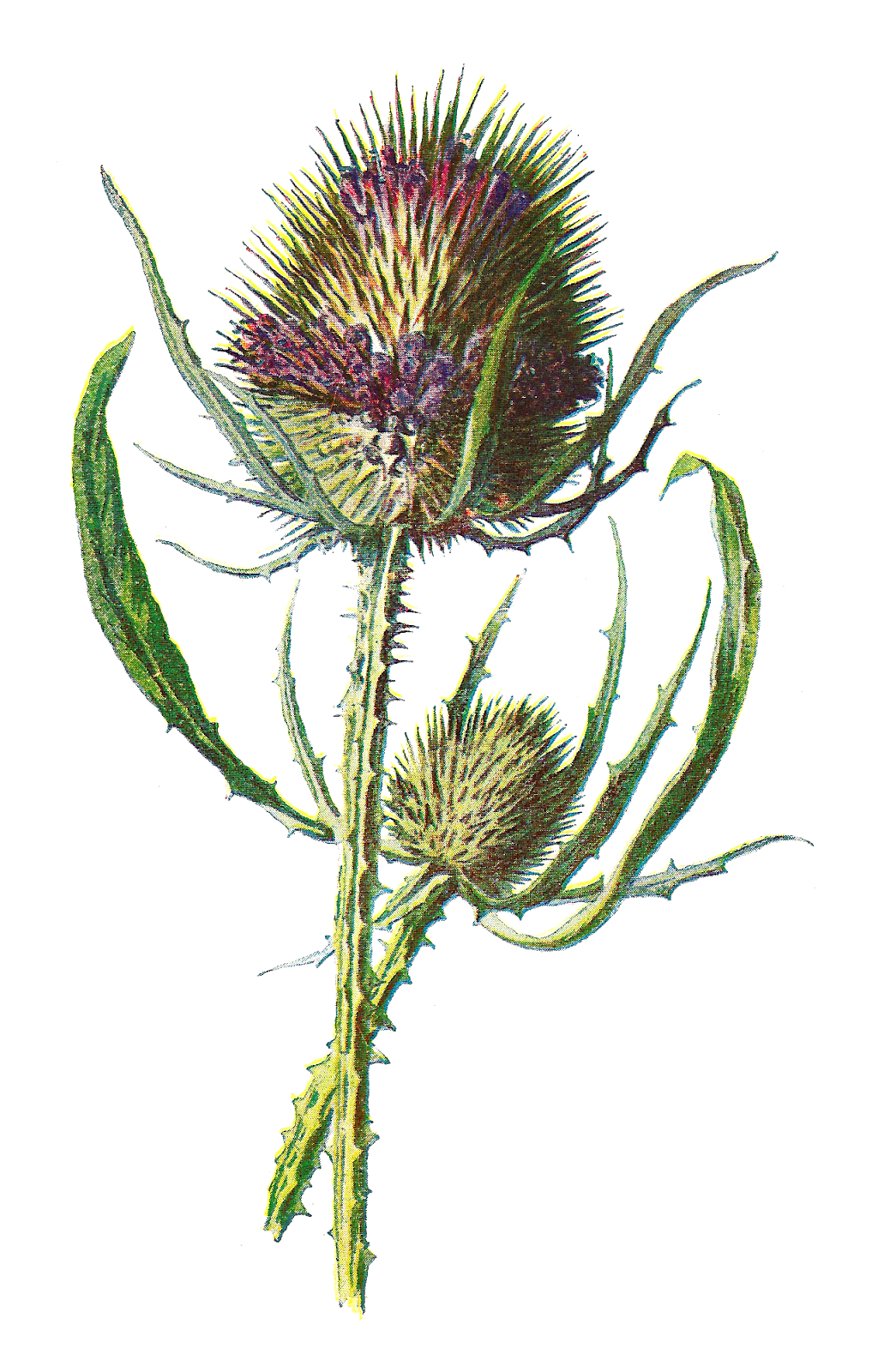 Antique Images: Free Digital Flower Clip Art: Wildflower Graphic.