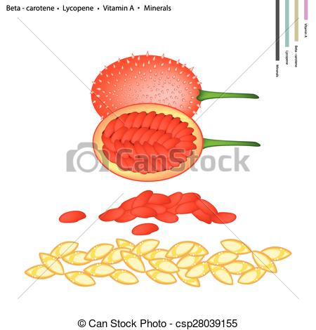 Clipart Vector of Teasel Gourds with Vitamin A and Minerals.