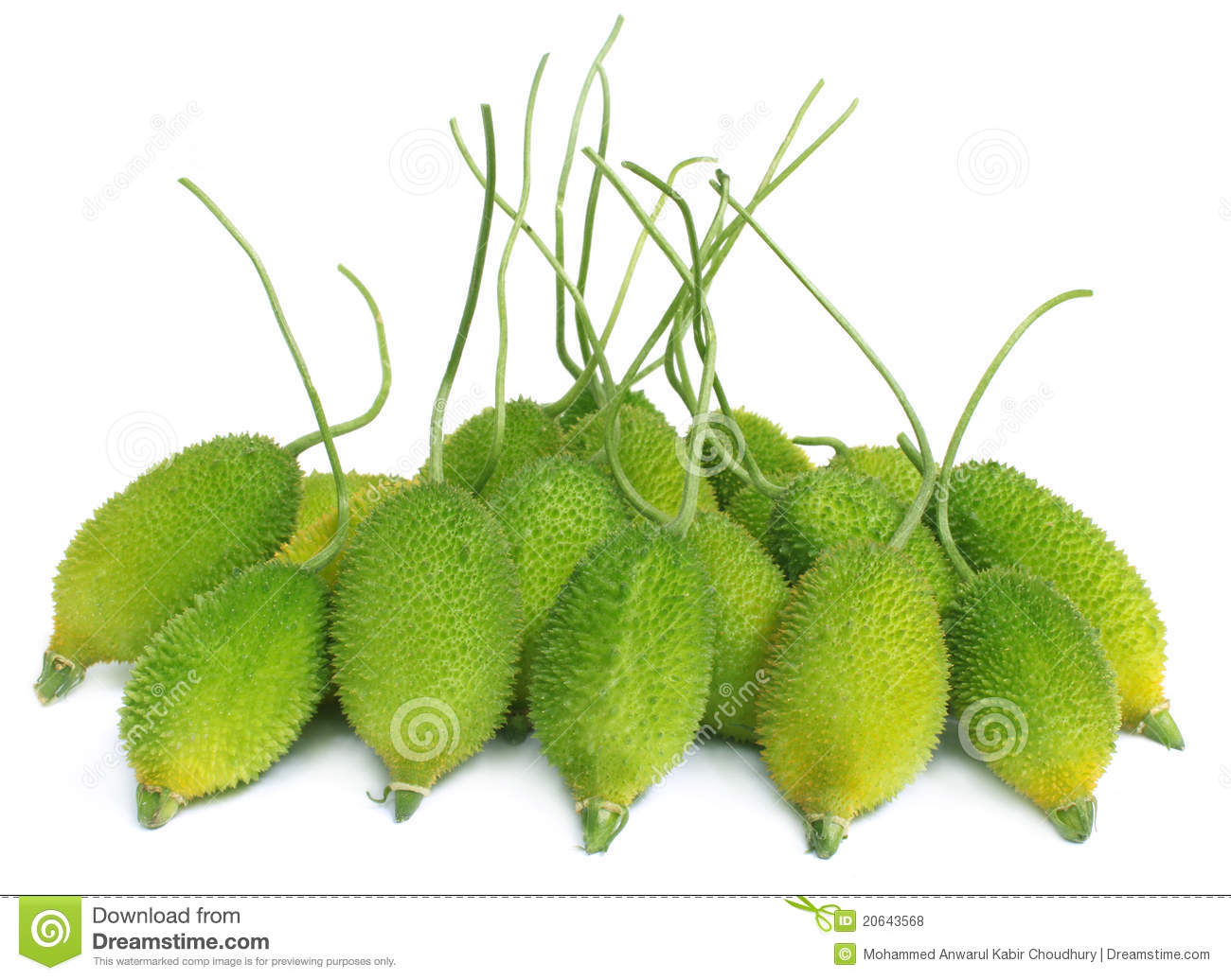 Teasel Gourds With Vitamin A And Minerals Stock Vector.