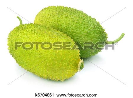Stock Photography of Teasel gourd or Kakrol k6704861.