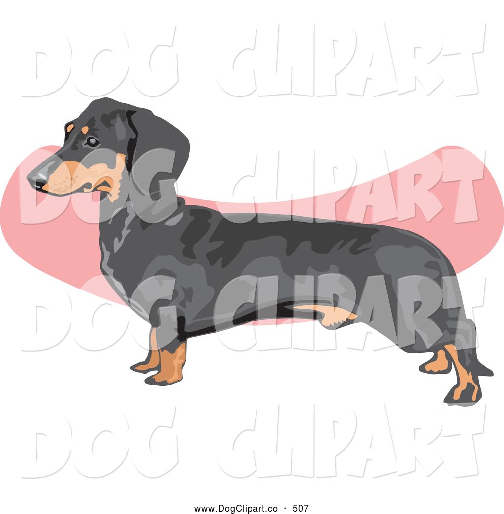 Royalty Free Teckel Stock Dog Designs.