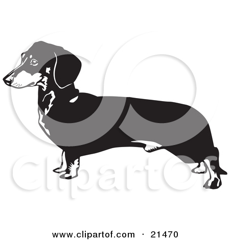 Clipart Illustration of a Long Dachshund, Doxie, Dackel, Or Teckel.