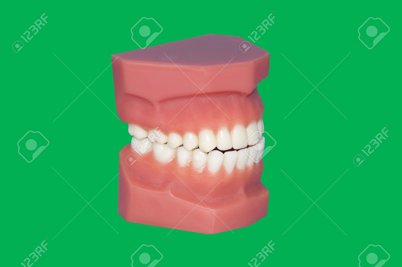 Teeth Mold Chroma Key Green Screen Stock Photo, Picture And.