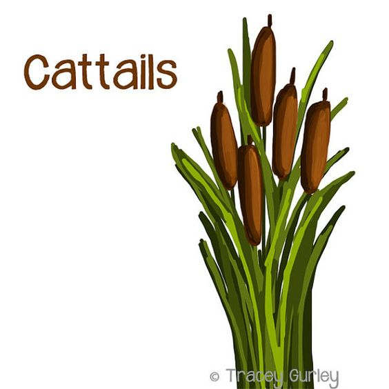 Cattails Graphic.