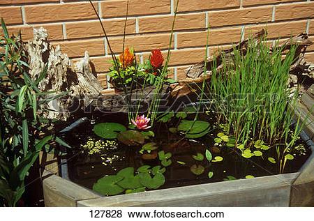 Pictures of Building a mini pond : 3. part 127828.