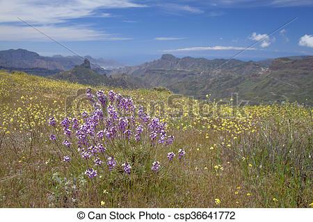 Picture of Gran Canaria, Caldera de Tejeda in April, Flowering.