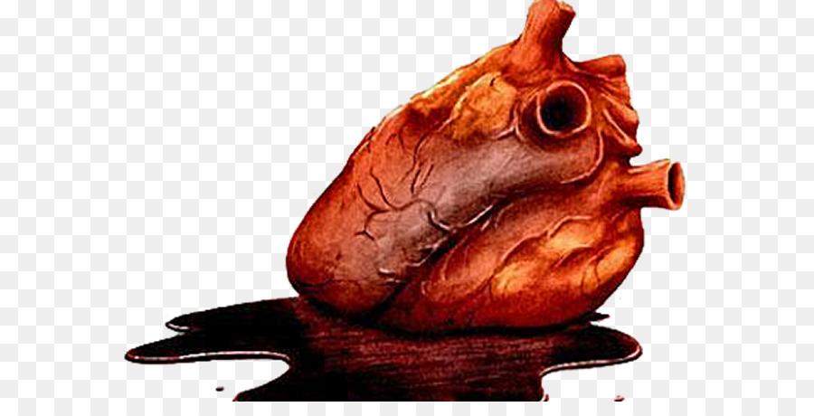 Bagaimana Jantung Anda Bekerja Anatomi The Tell.