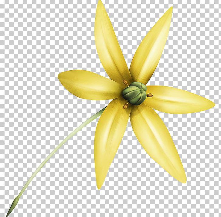 Telus International Flower Customer Service Petal PNG.