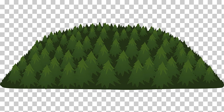 Temperate coniferous forest Tree, forest PNG clipart.