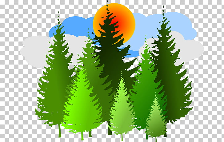 Temperate coniferous forest Free content , Green Forest.