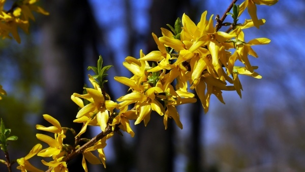 Spring f free stock photos download (83,311 Free stock photos) for.