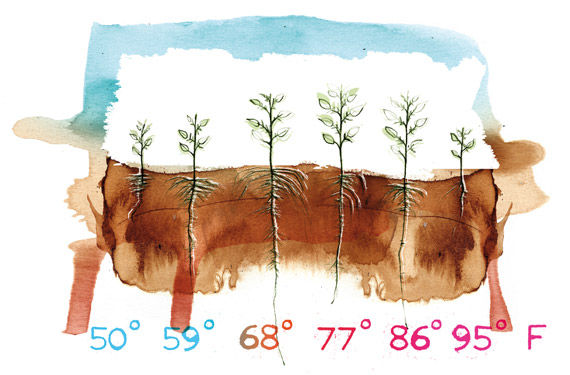 Root zone temperature and plant health.