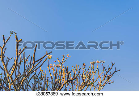 Stock Photograph of Temple Tree k38057869.