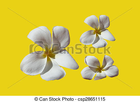 Temple tree flower clipart.