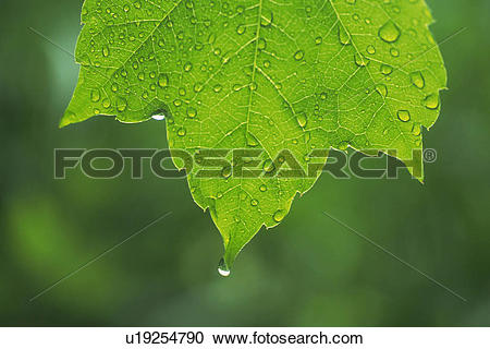 Stock Photography of Tender Green with Trickle, Close Up u19254790.