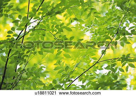 Stock Photography of Twig and Tender Green, Low Angle View.