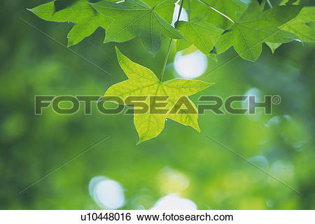 Stock Images of Tender Green, Close Up u10448016.