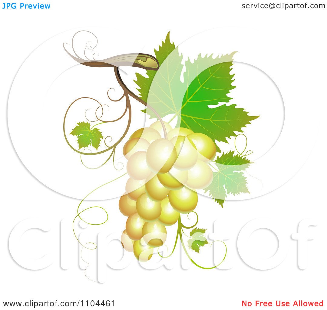 Clipart White Winery Grapes With Leaves And Tendrils.