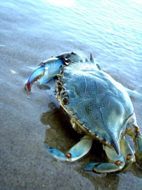 1000+ images about All Life Comes From the Sea. on Pinterest.