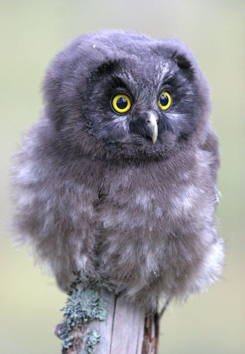 1000+ images about I LOVE OWLS! on Pinterest.