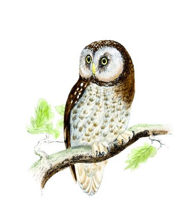 1000+ images about owl on Pinterest.