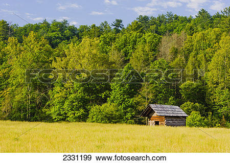 Stock Photograph of Early morning in cades cove great smoky.