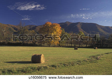 Stock Image of TN, Tennessee, Great Smoky Mountains National Park.