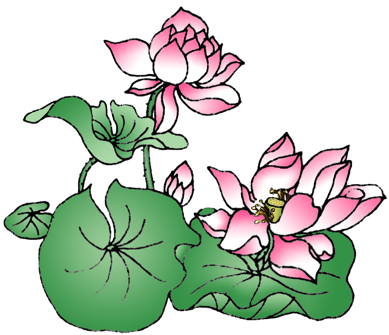 Cartoon Lotus Flower.