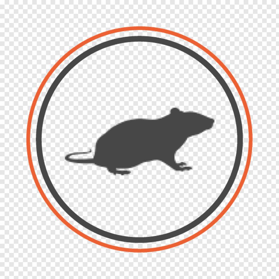 Bed, Rat, Pest Control, Oxisix Pest Control, Exterminator.