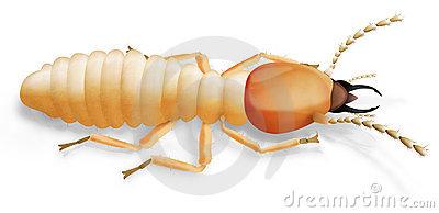 Termite Stock Illustrations.