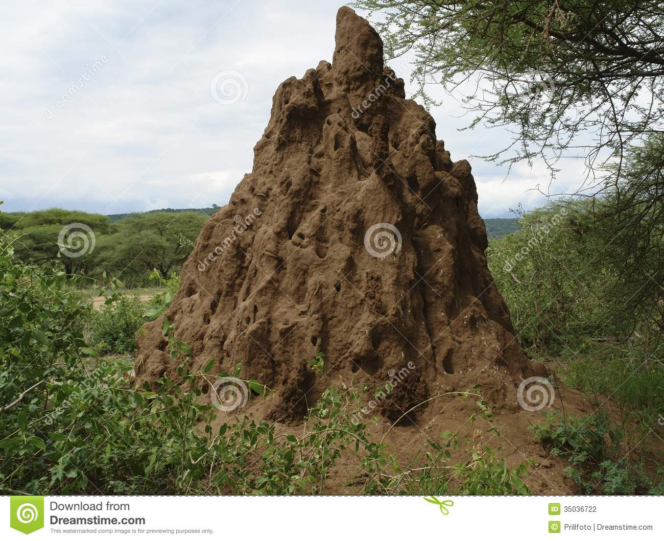 Termite Hill, Mound Stock Images.