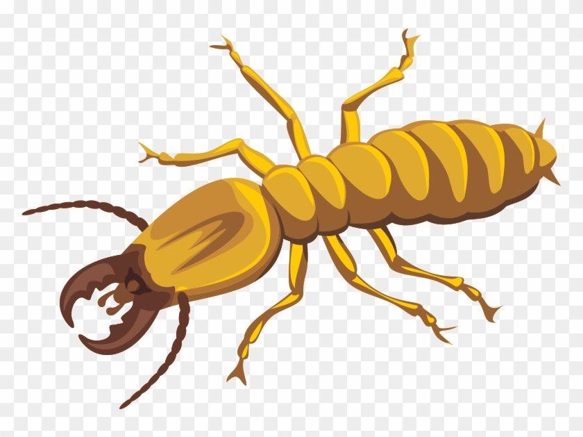 Termite Png Photos.