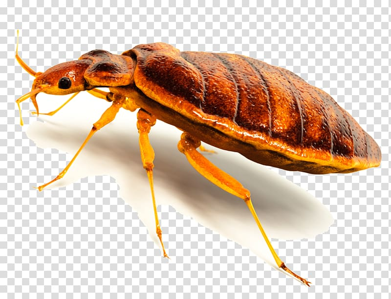 Insect Cockroach Termite Bed bug Rodent, bugs transparent.