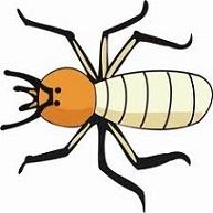 Free Termite Clipart.
