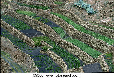 Stock Images of High angle view of terrace farming, Lanzarote.