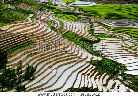 Terrace Farming Stock Images, Royalty.