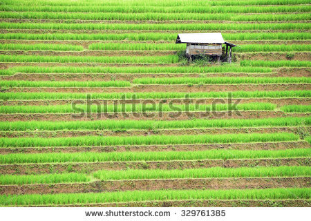 Terrace Farming Stock Photos, Royalty.