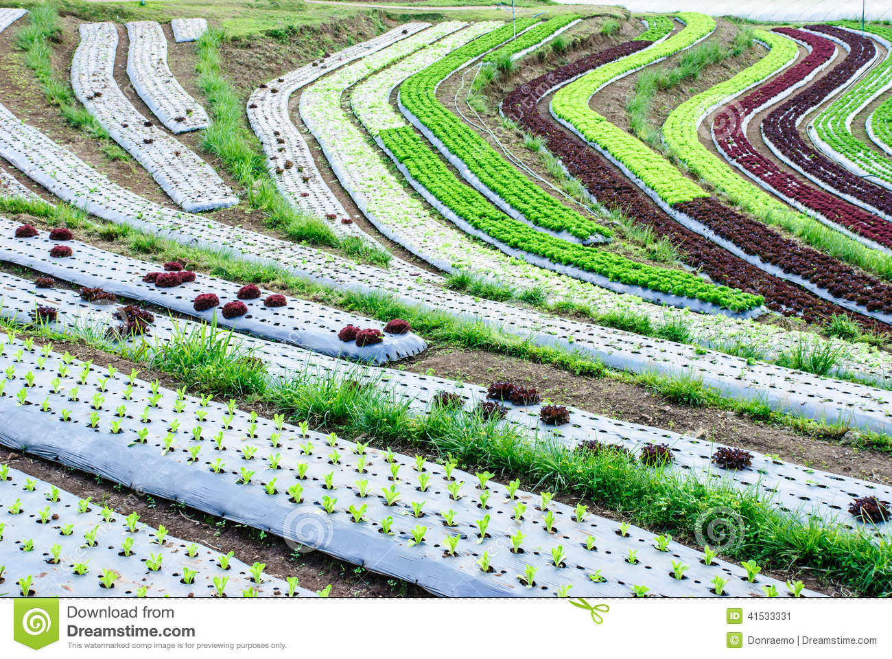 Terrace farming clipart clipground for Terrace cultivation