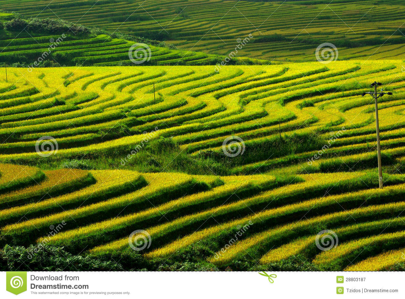 Terrace Rice Fields Vietnam Royalty Free Stock Photography.