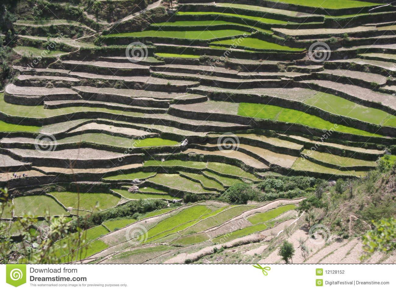 Himalayan Steppe Terrace Farming Uttaranchal India Stock.