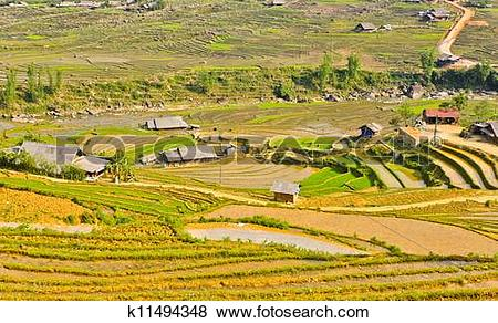 Pictures of Sapa rice terraced fields k11494348.