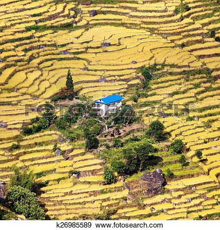 Stock Photograph of terraced fields of paddy field and primitive.