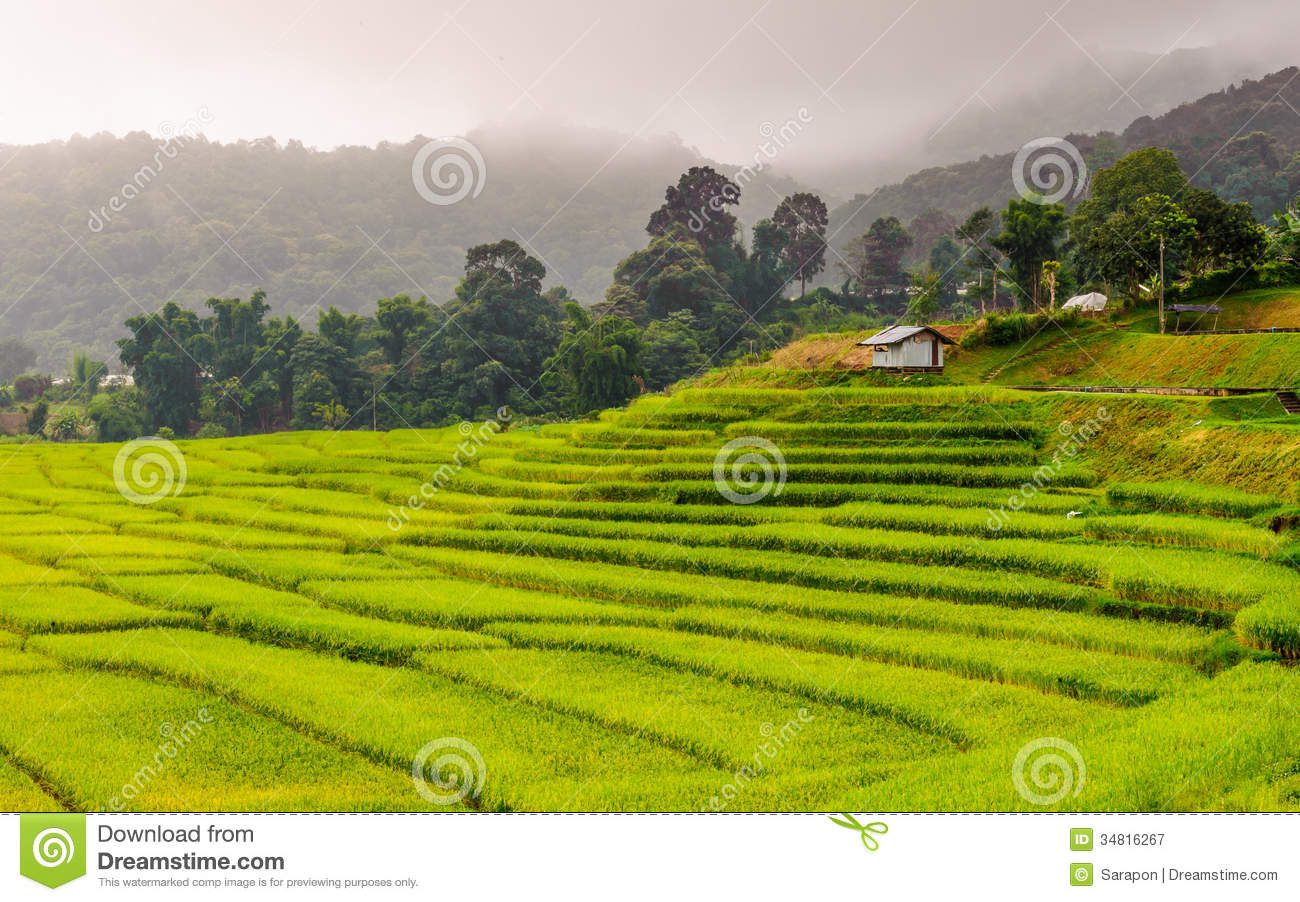 Rice Terraced Field In Chiangmai, Thailand Stock Photo.