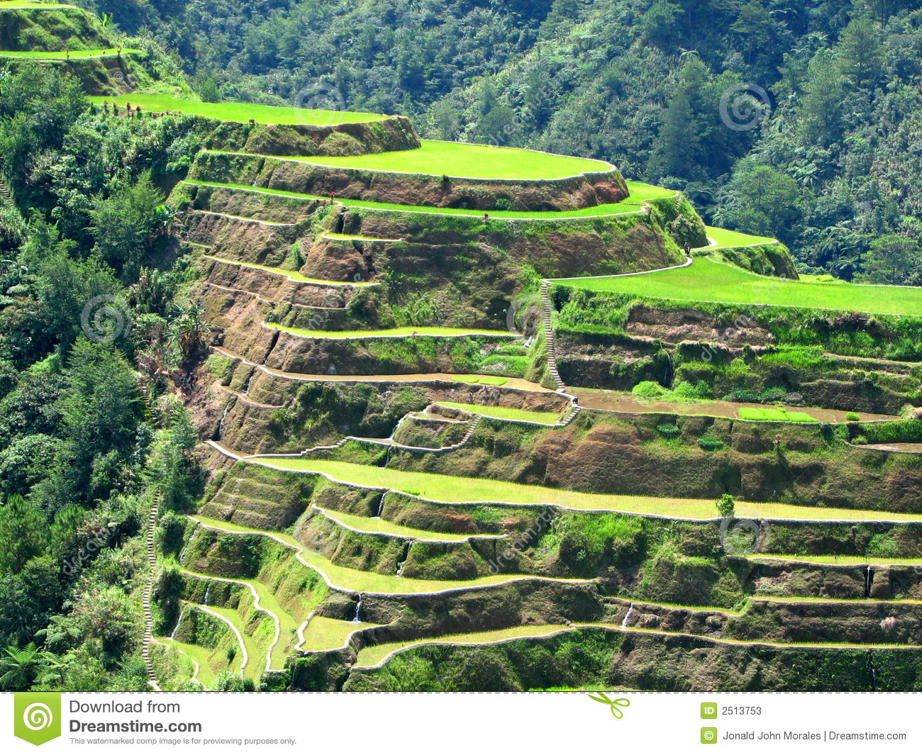 Banaue rice terraces clipart.